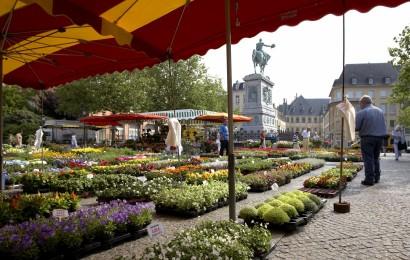market on william square cw 10